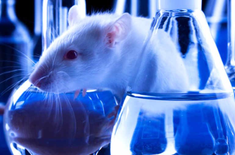 le binge drinking des rats adolescents conduit l alcoolisme des adultes planete sante. Black Bedroom Furniture Sets. Home Design Ideas