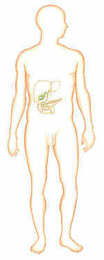 Les helminthes chez lenfant le traitement avec les préparations