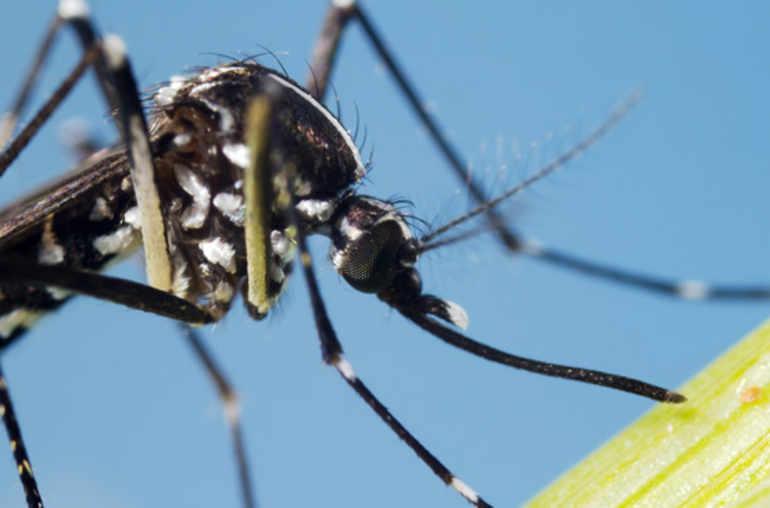comment se prot ger du zika le virus qui s attaque au f tus planete sante. Black Bedroom Furniture Sets. Home Design Ideas