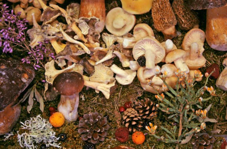 champignons digestion difficile