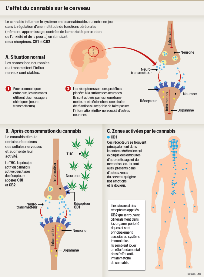 cannabis_therapeutique_infog