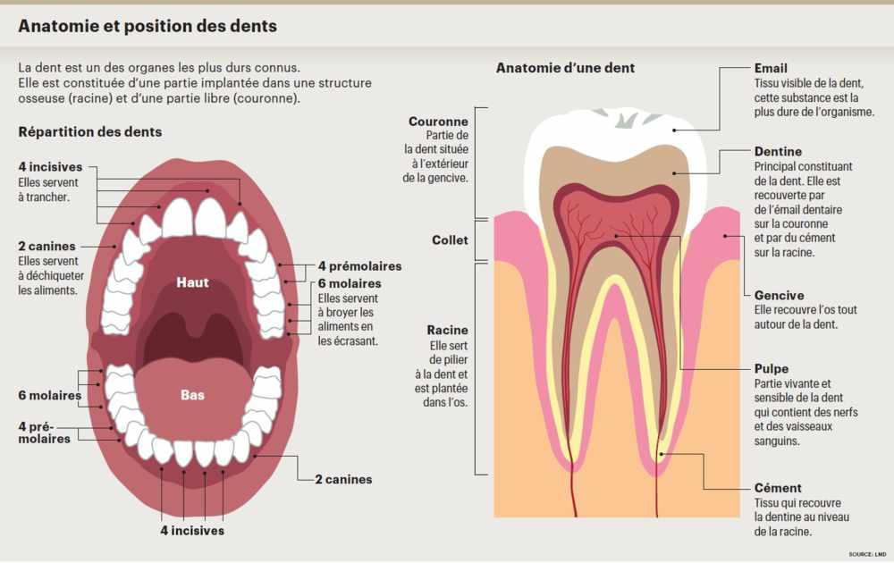 Le fil dentaire est il efficace pour pr venir les for Interieur de la bouche